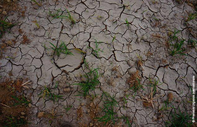 Drought in North Korea