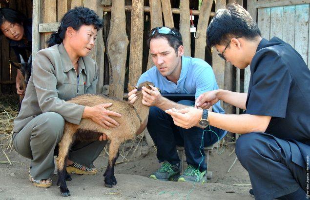Camille examine une chèvre en compagnie d'agriculteurs nord-coréens