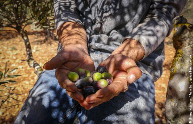 Les agriculteurs à Gaza subissent les conséquences du bloc, ici un agriculteur tient dans ses mains des olives qu'il a récolté