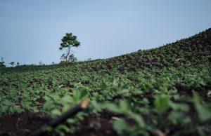 ©Clément Louis Kolopp   Green sight in Cameroon.