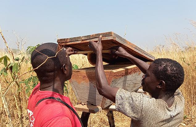 © Moïse Kotto-Feindiro | Visite de suivi auprès d'un apiculteur a proximité de Ndélé (République Centrafricaine), en janvier 2021